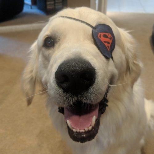 Team member Sherlock (dog)